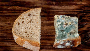 Pieces of fresh and stale bread on a dark wooden background_
